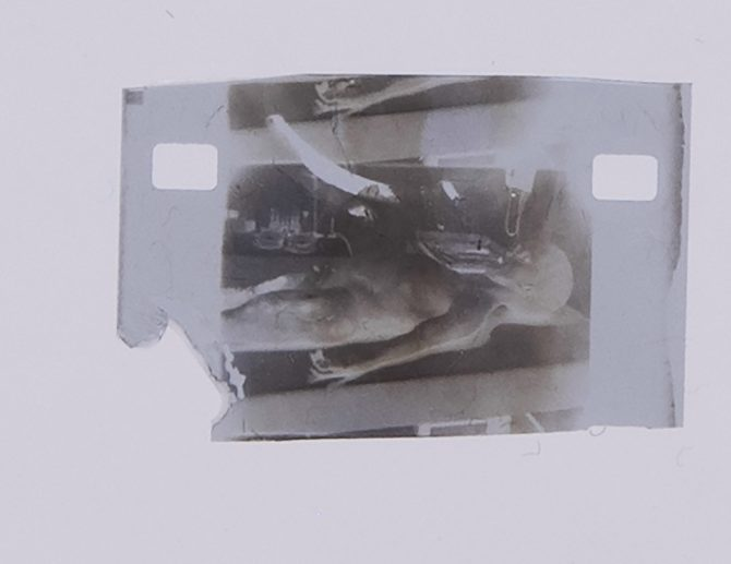 Roswell Alien Autopsy Photo for Sale